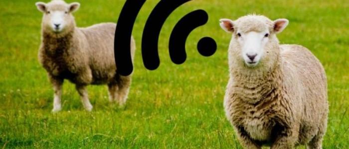 Ketika Domba Menjadi Pemancar WiFi di Pedesaan